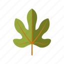 botany, fig, leaf, nature, plant, tree icon