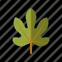 botany, fig, leaf, nature, plant, tree