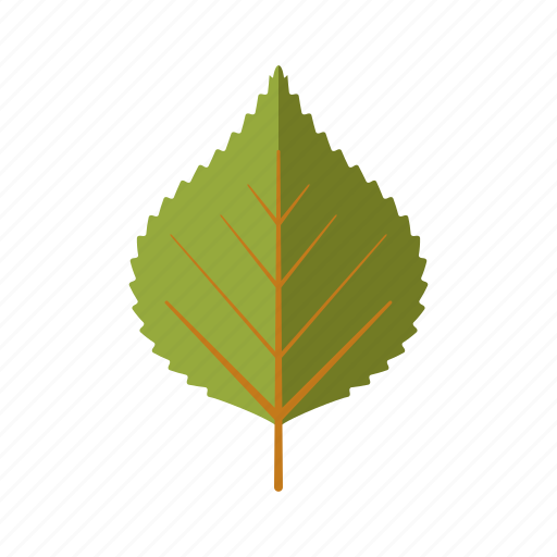 birch, botany, leaf, nature, plant, tree icon