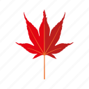 botany, japanese maple, leaf, nature, plant, tree icon
