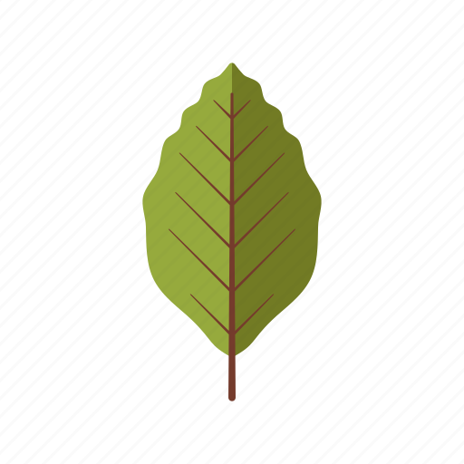beech, botany, leaf, nature, plant, tree icon