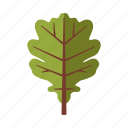 botany, leaf, nature, oak, plant, tree icon