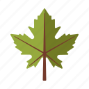 botany, leaf, maple, nature, plant, tree icon