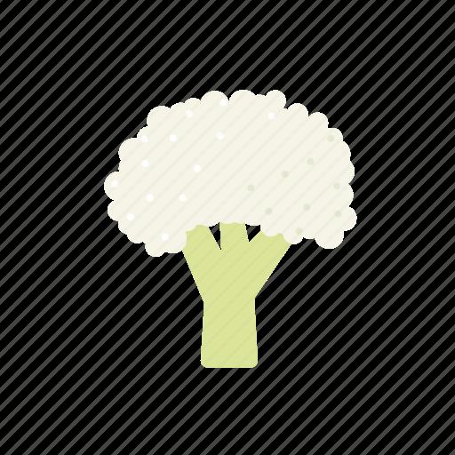 cabbage, cauliflower, food, vegetable icon