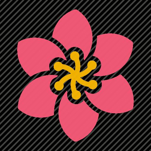 Bloom, decoration, flower, pattern icon - Download on Iconfinder