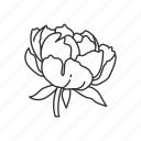 bloom, blossom, floral, flower, garden, peony, plant icon