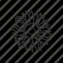 bloom, blossom, floral, flower, garden, plant, sunflower icon