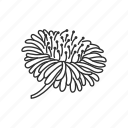 bloom, blossom, dandelion, floral, flower, garden, plant icon