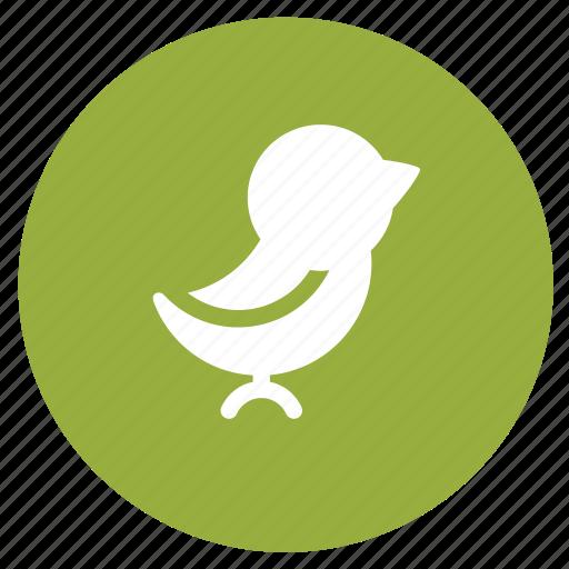 bird, communication, message, social, social media, tweet icon