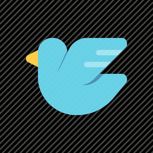 bird, messenger, pigeon, social media icon
