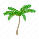 mexico, palm, plant, sightseeing, travel, tree icon