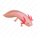 amphibian, animal, axolotl, mexico, sightseeing, travel icon