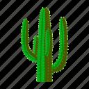 cactus, desert, mexico, plant, sightseeing, thorn, travel icon