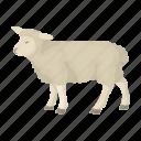 animal, country, landmark, national, scotland, sheep, travel