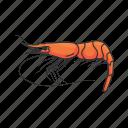 animal, crustacean, pink shrimp, prawn, seafood, shrimp, sushi icon