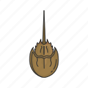 animal, living fossil, horseshoe crab, sea creature, seafood, crustacean icon