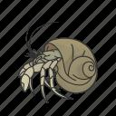 animal, caribean hermit crab, crab, crustacean, hermit crab, sea snail, seashell icon