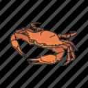 animal, blue rab, chesapeake blue crab, crab, crustacean, sea creature icon