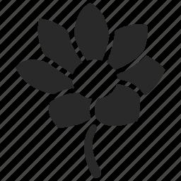 bloom, blooming, botanic, flower, garden, gardening, plant icon