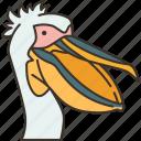 pelican, bird, beak, animal, nature