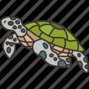 turtle, marine, animal, wildlife, nature