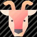 dairy, domestic, farming, goat, goat milk, livestock, nature