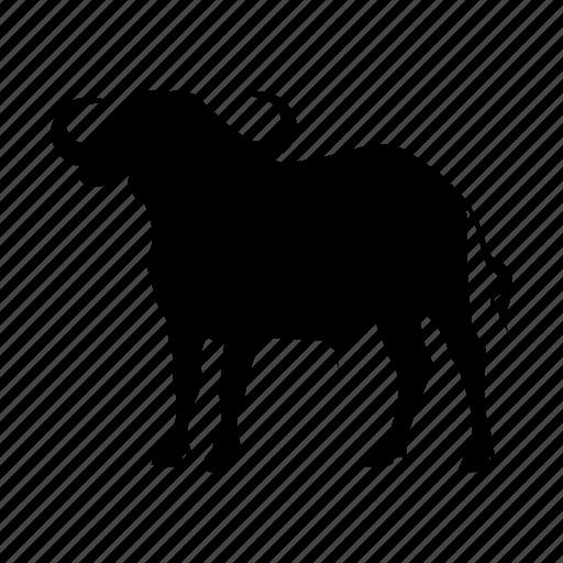 buffalo, cape, zoo icon