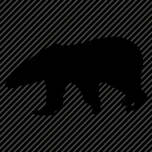 bear, oso, polar, zoo icon