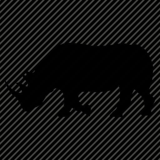 rhino, rhinoceros, rinoceronte icon