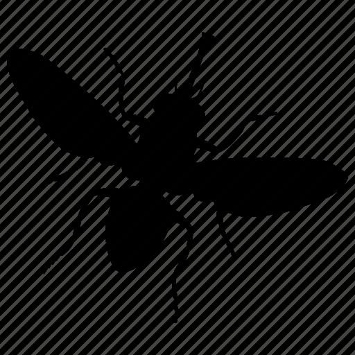 fly, tse-tse icon