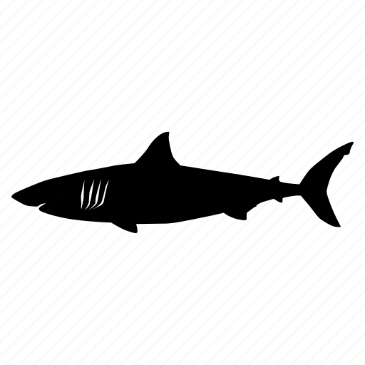 shark, tiburon icon