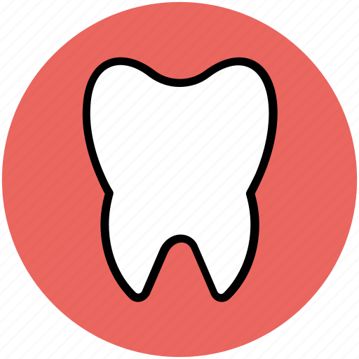body part, dental, human, human tooth, molar, stomatology, tooth icon