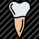 dental, medical, premolar, teeth, tooth