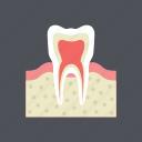 dental, dentist, gum, health, medical, molar, tooth