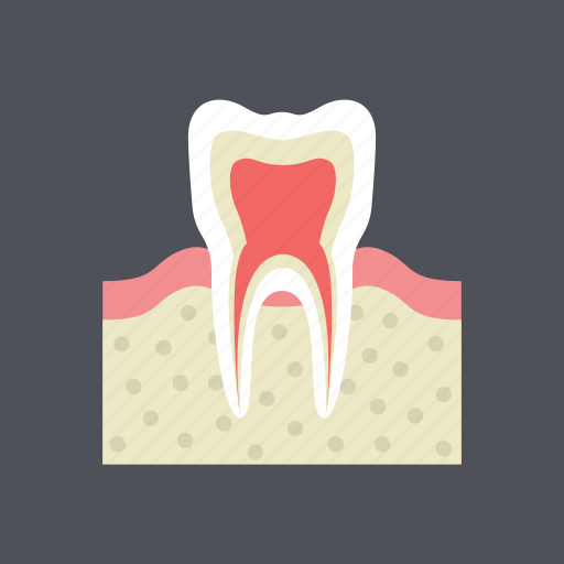 dental, dentist, gum, health, medical, molar, tooth icon