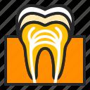 anatomy, dental, dentistry, health, healthcare, orthodontics, tooth icon