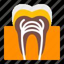anatomy, dentistry, health, healthy, oral, teeth, tooth icon
