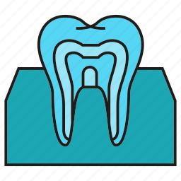 dental, gum, tooth icon