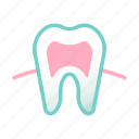 dental, health, hygiene, medical, oral, tooth, tooth root