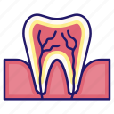 anatomy, dental, medical, nerve, oral, tooth, tooth anatomy icon