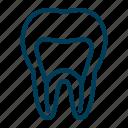 dental, dentist, dentistry, root, tooth