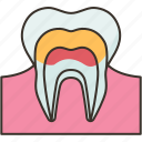 enamel, tooth, dental, care, oral icon