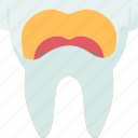 root, canal, anatomy, dental, enamel icon
