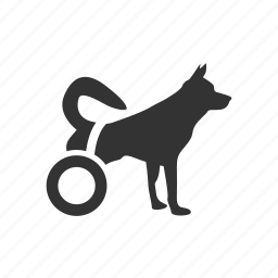 animal, disabled, disabled dog, dog, medical, pet, wheel icon
