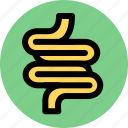 enteric, intestinal icon