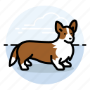 corgi, dogs, pet icon