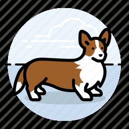 corgi, dog, dog show, dogs, pet, short dog, show dog icon