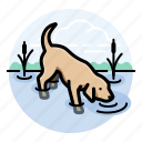 dogs, labrador retriever, pets icon