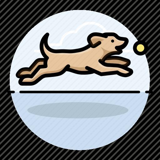 dog fetching, dogs, labrador retriever, pet icon