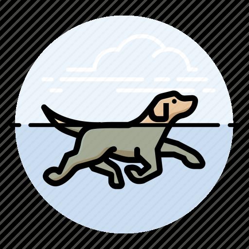 dog swimming, dogs, labrador retriever, pet icon